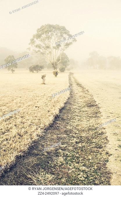 Desaturated icey white winter photo of a dried up creek leading to trees in fog and mist. Saint Marys, Tasmania