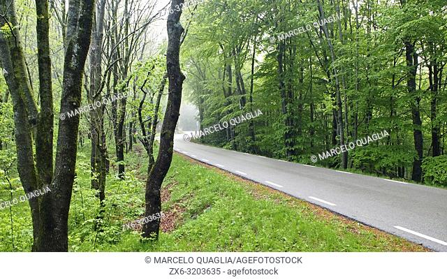 Road through beech forest (Fagus sylvatica). Springtime at Montseny Natural Park. Barcelona province, Catalonia, Spain