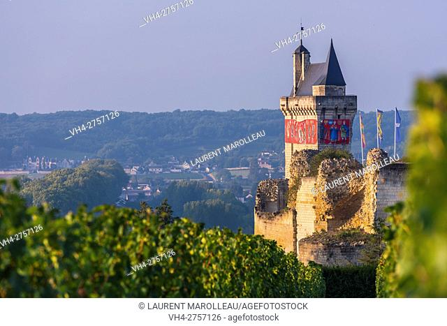 Vineyard and the Clock Tower of the Royal Fortress of Chinon. Indre-et-Loire, Central Region, Loire Valley, France, Europe