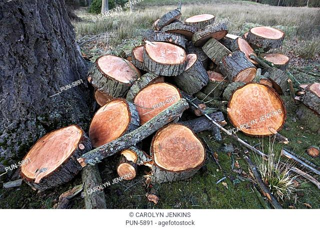 Felled trees in the New Forest National Park in spring