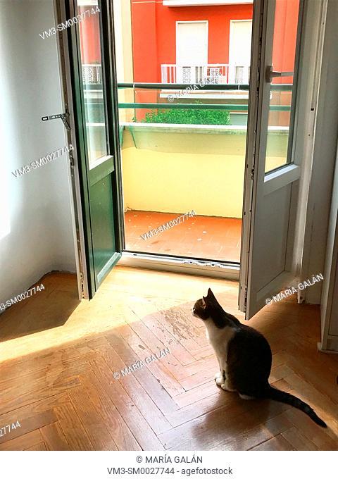 Cat sitting by an open window