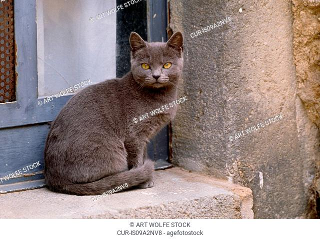 Grey cat sitting on concrete windowsill, Italy
