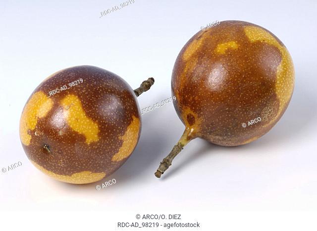 Sweet Granadilla fruits Passiflora ligularis Passifloraceae