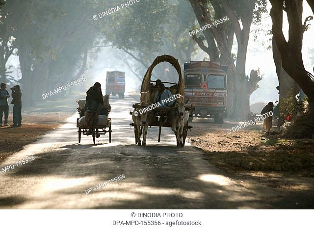 Cyclist with tricycle and bullock cart in morning mist seen on highway in Jharkhand ; India