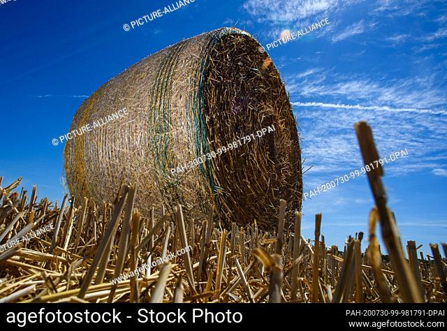 30 July 2020, Saxony-Anhalt, Schleibnitz: Bales of straw lie on a harvested grain field. Midsummer has arrived in the country