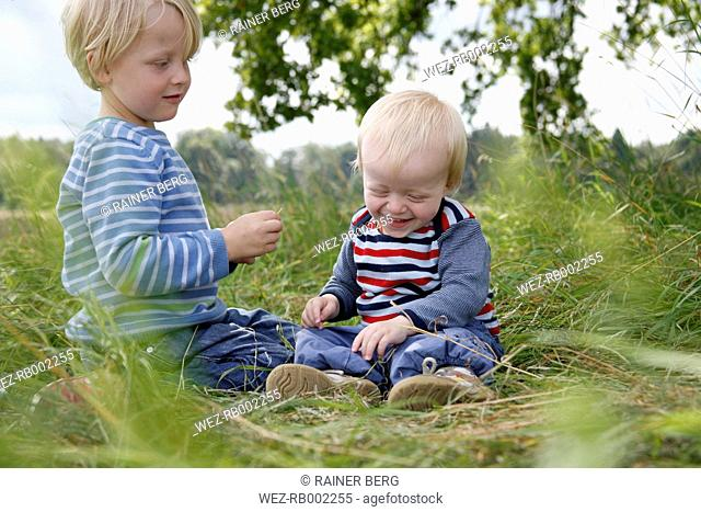 Two little brothers sitting on a meadow