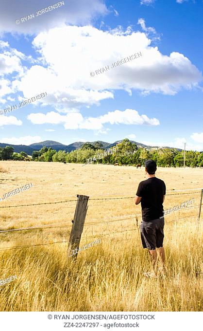 Vertical travel and lifestyle photo on the back of a man watching cattle roam on an Australian country farm during a hot dry summer