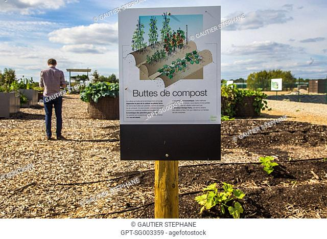 GROWING VEGETABLES IN MOUNDS OF GREEN WASTE COMPOST, EXPERIMENTAL FARMING PARCEL, PREMIER DEMONSTRATOR OF URBAN FARMING, AN INNOVATIVE SOLUTION FOR...
