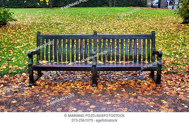 Bench in autumnal, Hyde Park, London, England, United Kingdom, Europe