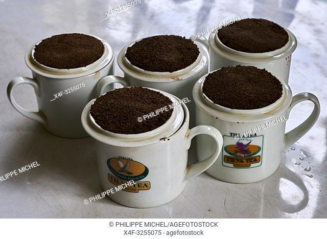 Kenya, Kericho county, Kericho, usine de thé Tilya / Kenya, Kericho county, Kericho, Tilya tea factory