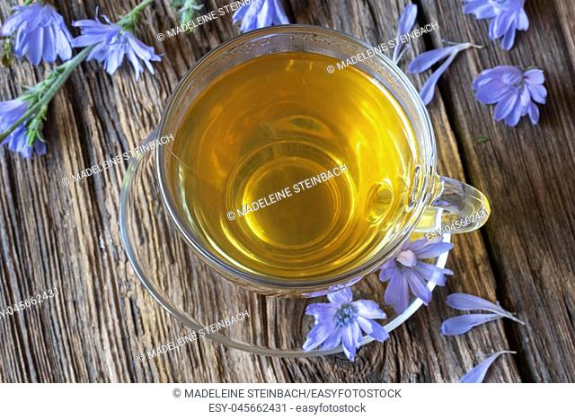 A cup of chicory tea with fresh flowers, top view