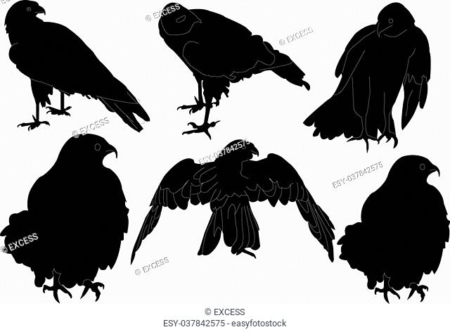 illustration of falcon collection - vector