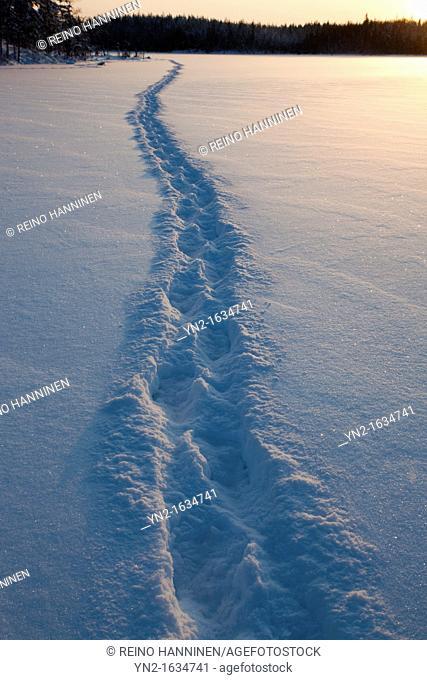 Human trail on snow on frozen lake ice at midwinter  Location Mustalampi Suonenjoki Finland Scandinavia Europe EU