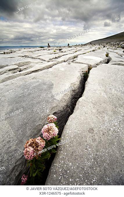The Irish Burren in Clare county