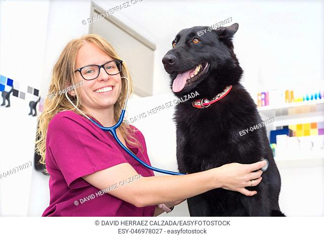 Female veterinary doctor using stethoscope for cute dog examination