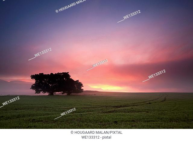 Landscape photo of a dramatic sunrise over a freshly planted wheat field. Swellendam, Western Cape, South Africa