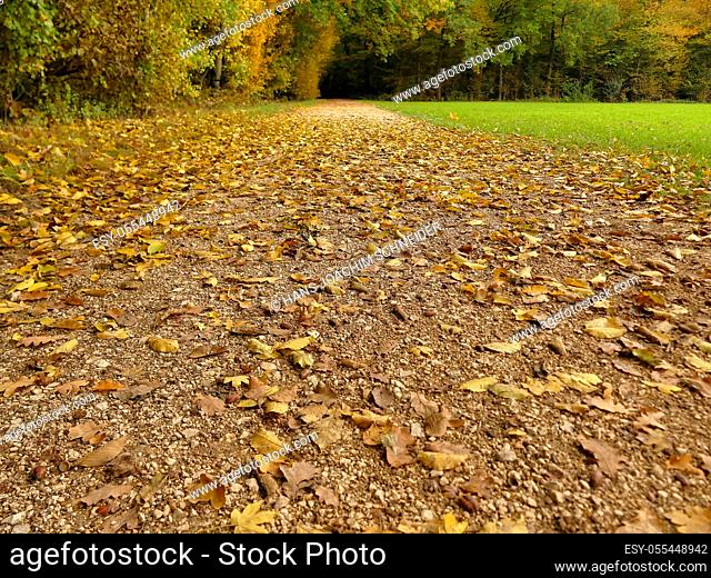 autumnal painted leaves on a track
