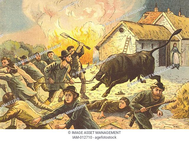 Farmer's wife letting out a bull to frighten off agricultural workers attacking a farm, c1830. Rick burning and machine wrecking widespread at this time as...