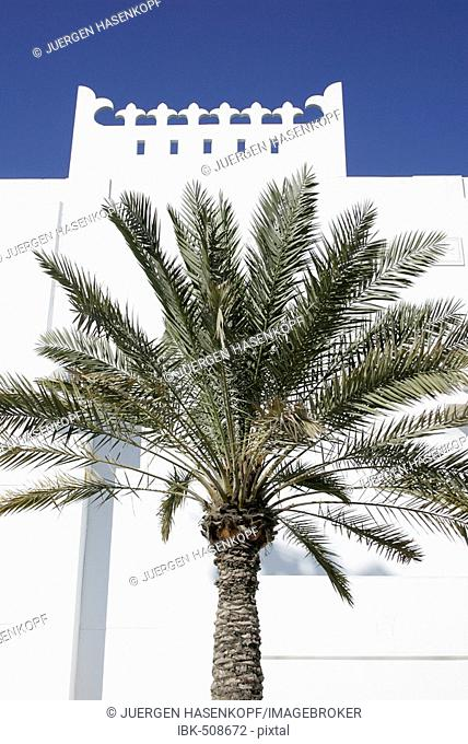 Qatar, Doha, Palm tree in front of a white building, Arabian architecture