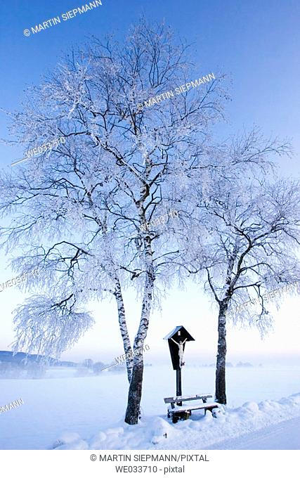 Cross and birches, winter morning. Schlehdorf, Upper Bavaria, Germany
