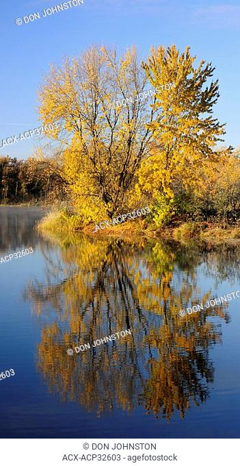 Sugar maple reflected in the Vermilion River. Greater Sudbury, Ontario, Canada