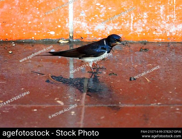 12 July 2021, Brandenburg, Potsdam: A swallow stands on the wet floor of the Griebnitzsee regional and suburban railway station