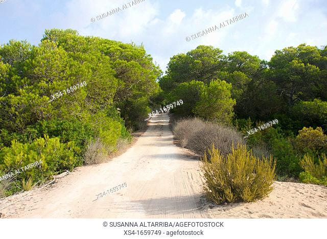 Sandy road to Formentera a scooter out among the pines  Balearic Islands, Spain, Europe