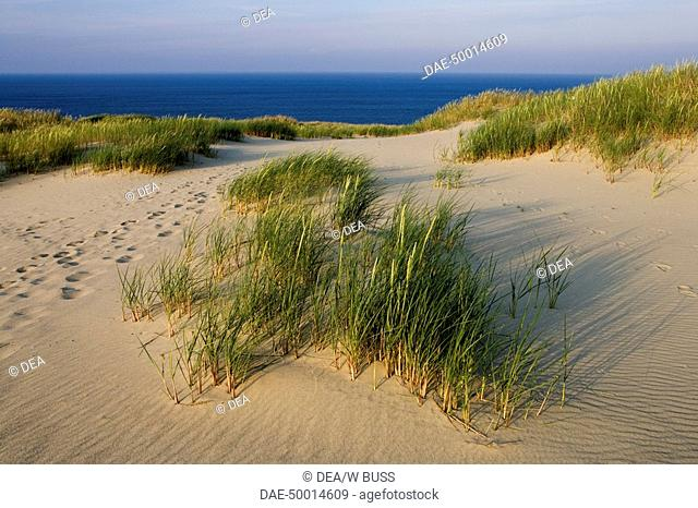 Lithuania - Klaipéda County - Curonian Spit (UNESCO World Heritage List, 2000). This spit has the highest drifting sand dunes in Europe