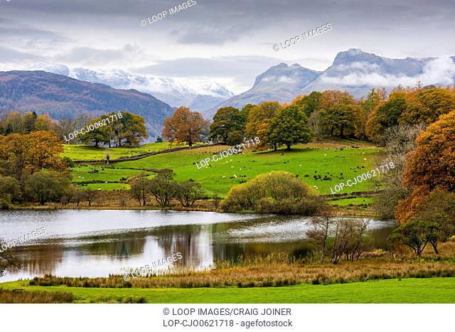 Loughrigg Tarn with Lingmoor and Bow Fell and the Langdale Pikes beyond in the English Lake District
