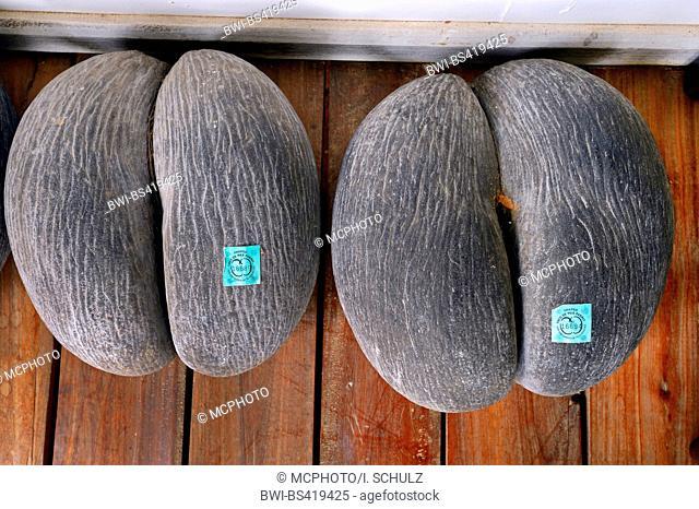 coco de mer, double coconut (Lodoicea maldivica), licensed fruits of Coco de Mer, Seychelles, Mahe