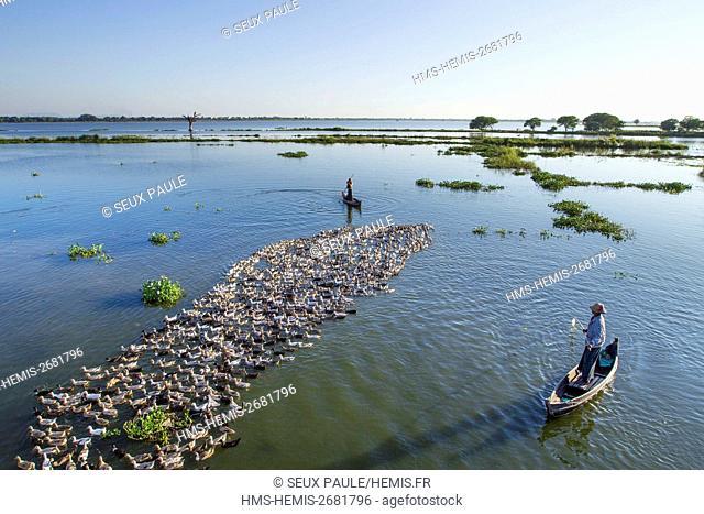 Myanmar (Burma), Mandalay district, Amarapura, ducks near U Bein bridge