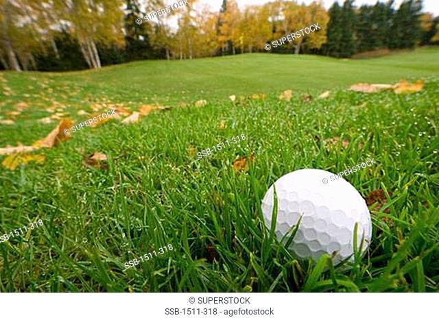 Close-up of a golf ball on grass