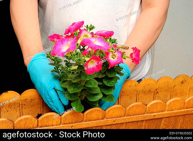 Balkonbepflanzung