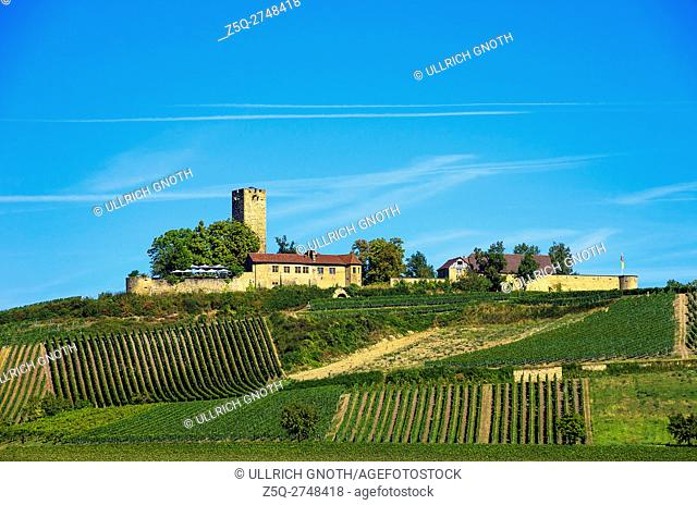 View of Ravensburg Castle surrounded by vineyards in Sulzburg, Baden-Wurttemberg, Germany