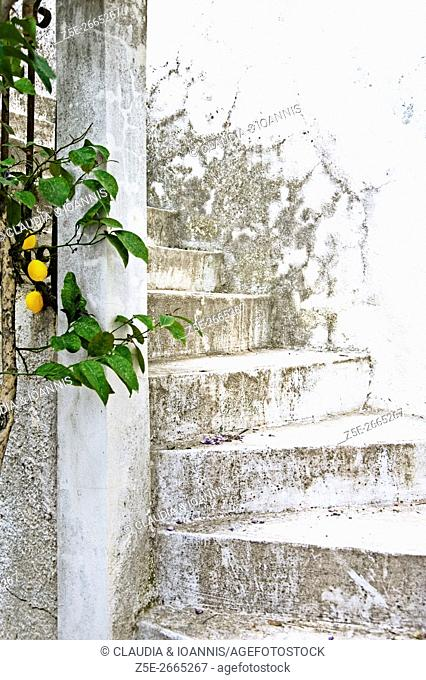 White and weathered staircase with lemon tree