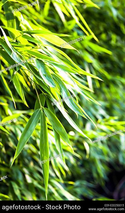 Fresh green bamboo backplate