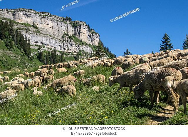 pass of ayes,sain pierre de chartreuse,isere,france