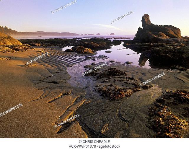 USA, ,Washington State, Olympic Peninsula National Park, sunset on Shi Shi Beach at low tide