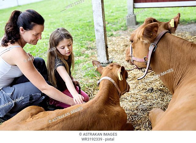 Mother with daughter (4-5) stroking calf