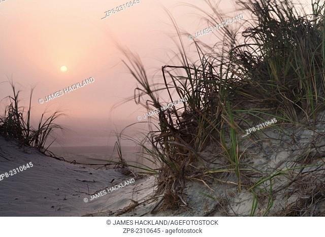 The sun setting over grasses blowing in the wind. South Padre Island, Texas, USA