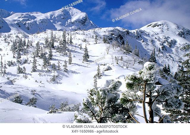 Winter scenery at Rohacska dolina, Zapadne Tatry - Rohace