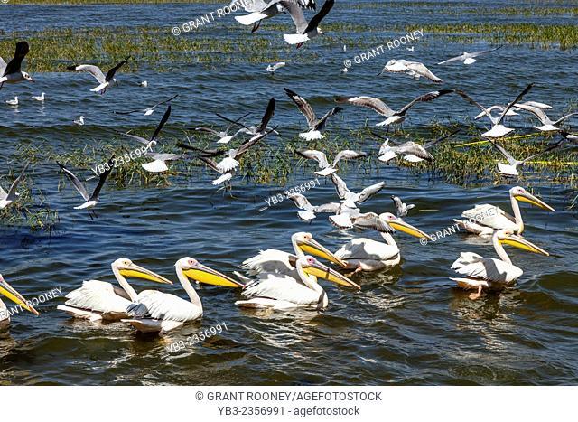 Bird Life, Lake Hawassa, Hawassa, Ethiopia