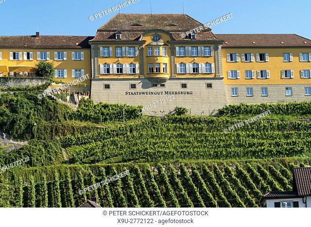 vineyard and Winery Staatsweingut Meersburg in Meersburg at Lake Constance, Baden-Württemberg, Germany,