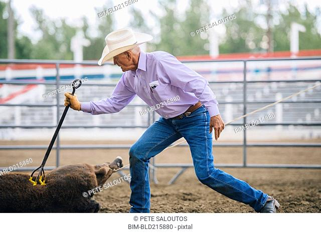 Caucasian cowboy branding cattle in rodeo