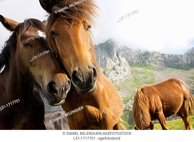 horses in the mountains, Somiedo Nature Reserve, Asturias, Spain