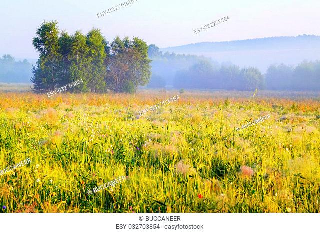 A trees cluster in morning light with delicate fog over meadows. Poland, Swietokrzyskie