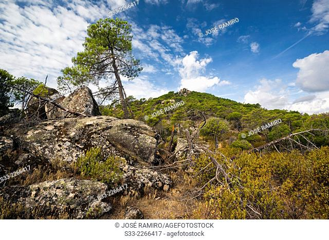 Muñana cliff from Valdelavieja pinewood in Cadalso de los Vidrios. Madrid. Spain. Europe