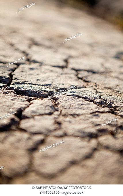 aridity on the floor Certes Domain Audenge, Arcachon basin. Gironde. Aquitaine France