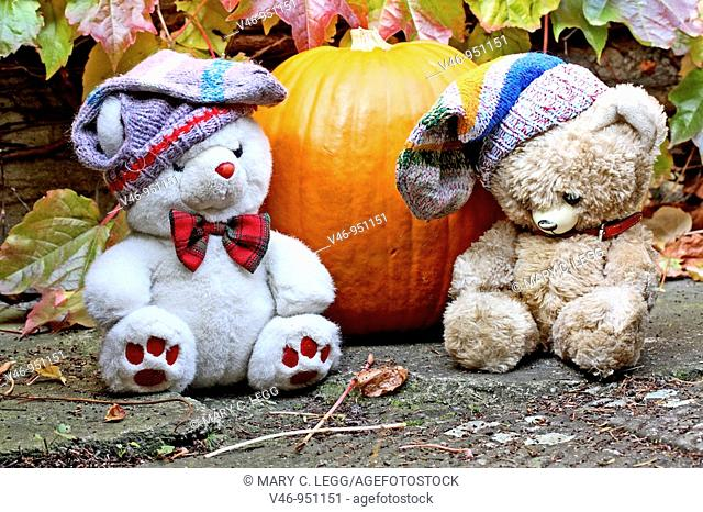 Fatso Bear and Vintage Bear sit by the Halloween pumpkin  Fatso is an overweight white teddy bear  Fatso has a stripy wool sock on his head and looks at his...