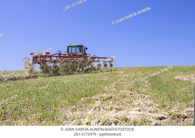 Tractor raking hay over sloped ground. Driver watching the raking